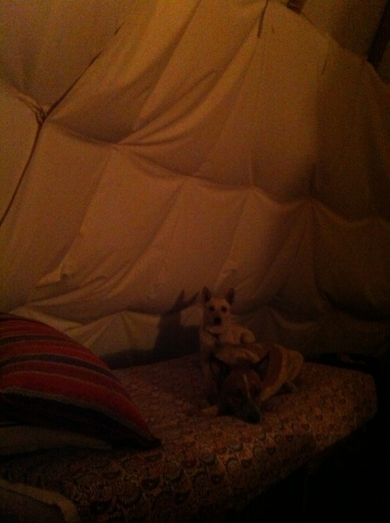 two dogs in a teepee