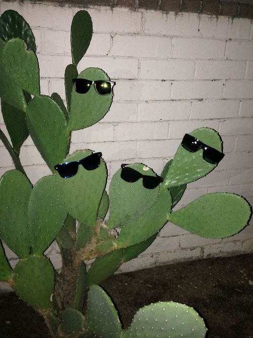 cactus party