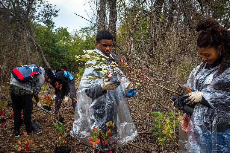 Planting a red chokeberry shrub in Jamaica Bay Wildlife Refuge. Credit Dave Sanders for The New York Times