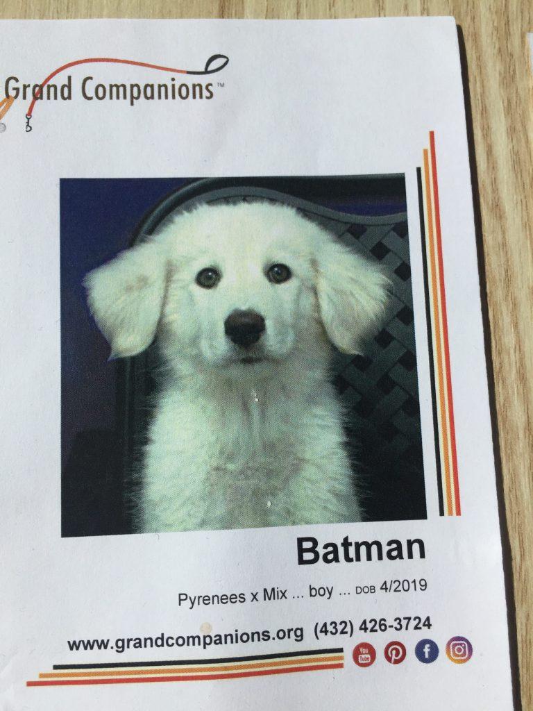 lil batman