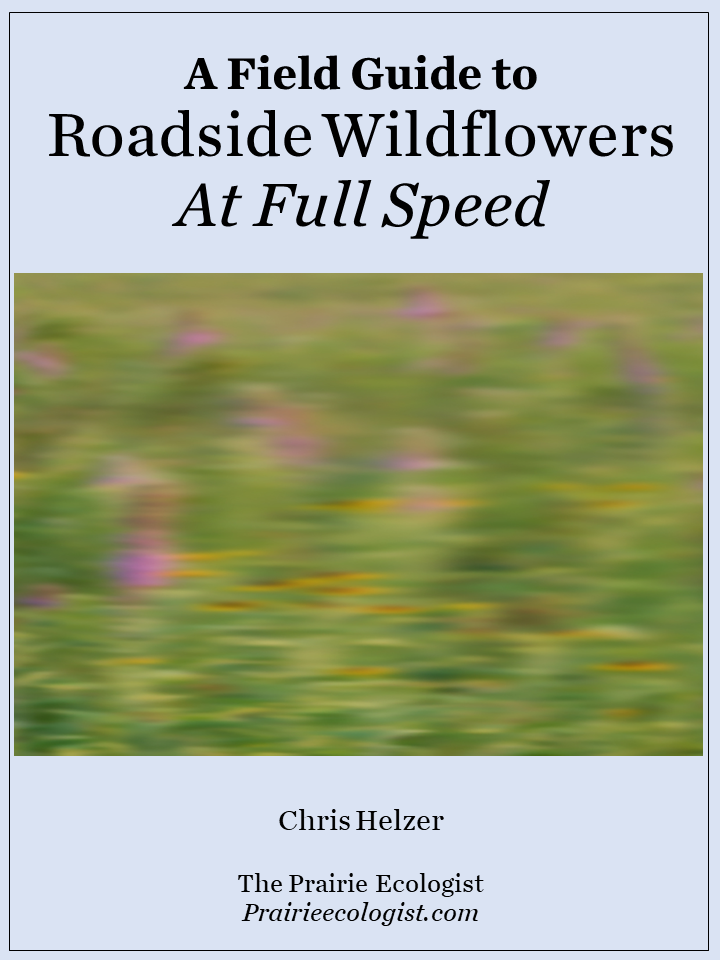 a field guide to roadside wildflowers at full speed by chris helzer